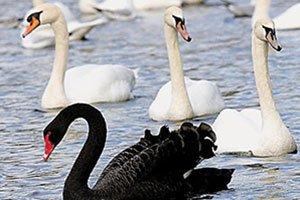 De quelle façon un trader peut-il faire face à un Black Swan ?