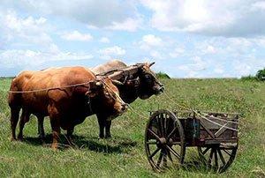 Fiscalité : ne mettez pas la charrue avant les bœufs