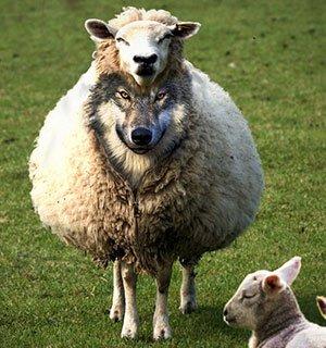 Introduction en bourse : êtes-vous un loup ou un mouton ?