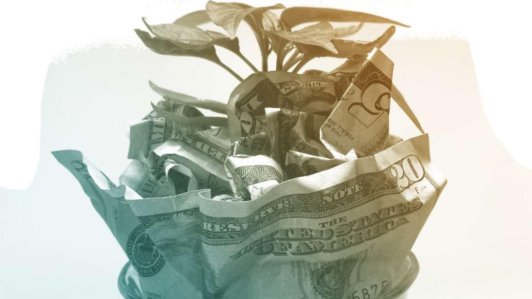 Plante qui pousse dans des dollars US