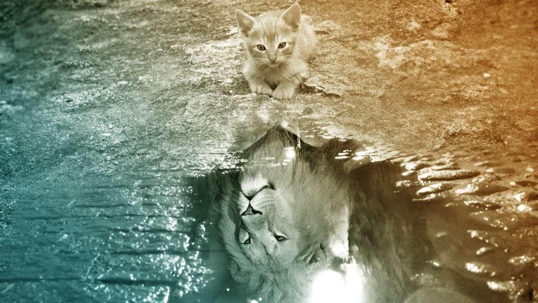 Reflet en forme de lion d'un chat qui se regarde dans une flaque