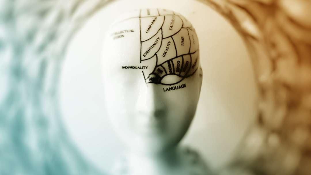 Tête mannequin avec localisation écrites des fonctions du cerveau gauche