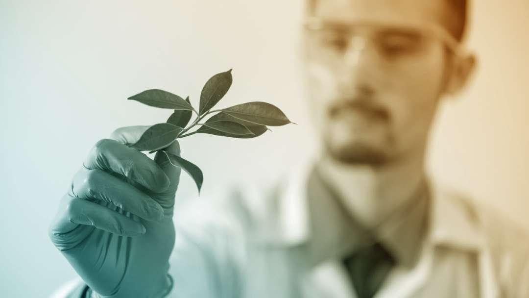 Chercheur qui tient une plante entre le pouce et l'index