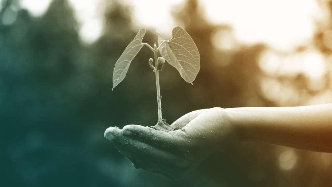 main qui tient une petite plante avec de la terre